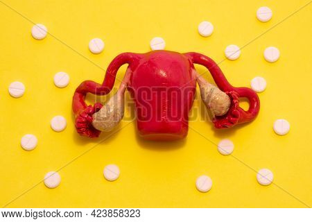 Anatomical Model Of The Female Reproductive System, Namely The Uterus With Appendages, Is On A Yello
