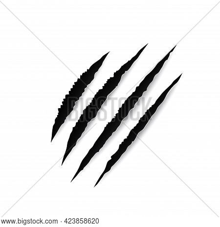 Animal Claw Marks, Paw Scratches, Vector Slash Traces Of Tiger, Bear, Lion Or Wild Cat, Beast Or Dra