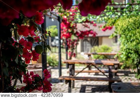 Bokeh Of Lovely Colorful Outdoor Pubs Backyard Full Of Red Flowers Hanging From A Pergola On A Brigh