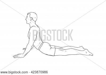 Yoga Cobra Pose Or Bhujangasana. Man Practicing Strengthing Yoga Pose. Engraved Vector Illustration