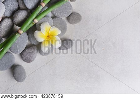 frangipani and zen like grey stones and two bamboo grove with copy space on gray background