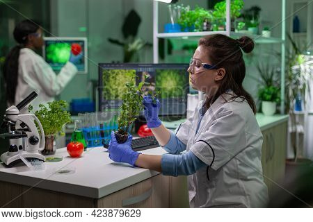 Biologist Scientific Doctor Examining Green Sapling While Typing On Keyboard Ecology Expertise. Woma