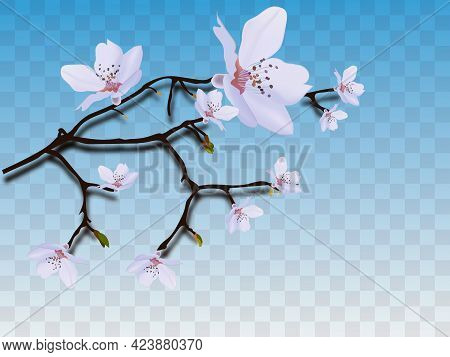 Blooming Cherry. Spring Background. Falling Sakura Pink Petals. Eps