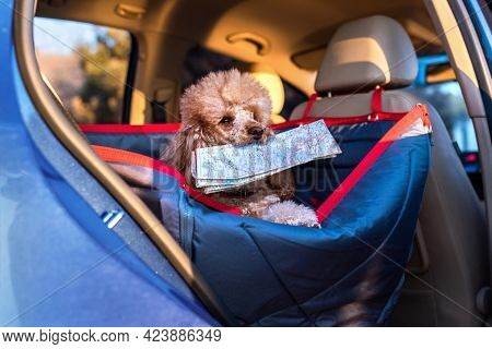 Dog Traveling In A Car Seat The Front Seat Of A Car. Dog With A Map. Traveling With A Dogs.