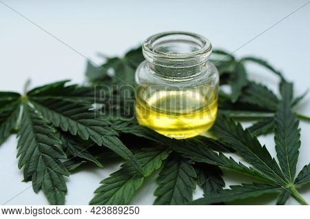 Marijuana Oil, Cbd Recreation. Fresh Cannabis Leaves Close Up, Isolated On White Background. Home Re