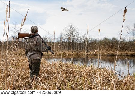 A Duck Hunter Stands On The Reedy Shore Of The Lake And Looks At A Duck (mallard Duck) That Has Arri