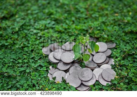 Growth Small Tree On Thai Stack Coin 5 Baht With Green Background. Growth Earn Money Investment And