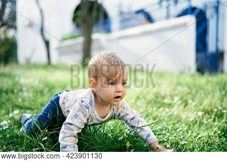 Baby Is Kneeling On The Lawn Among White Daisies