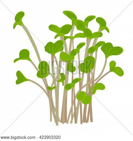 Radish Sprout Vector Stock Illustration. Sprouted Red Radish. Micro-village.of Young Plants. Sproute