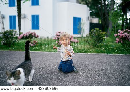 Kid Is Kneeling On The Asphalt Near Flowering Bushes And A Cat