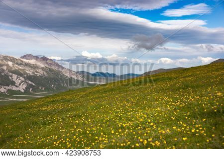 Natural Landscape With Flower Meadow In Mountains