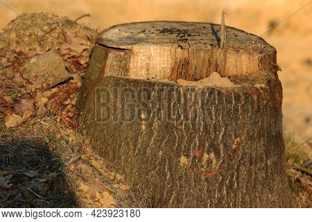 A Trunk Of A Cut Tree On The Construction Site Of The Municipal Bypass