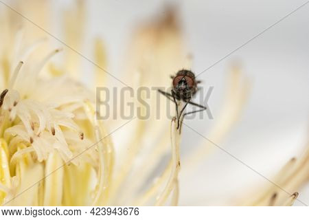 A Fly Sitting On The Stamens Of A Flower.