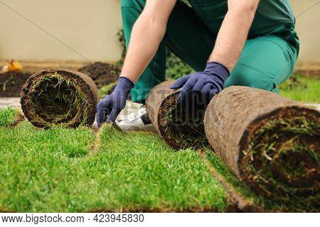 Worker Unrolling Grass Sods At Backyard, Closeup