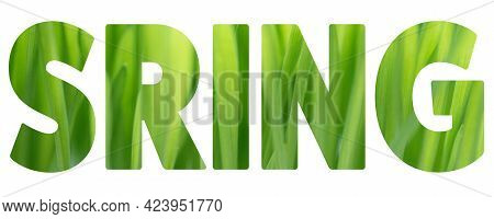 Word Spring Made Of Green Grass Texture On White Background. Spring Concept. Flat Lay. Closeup Natur