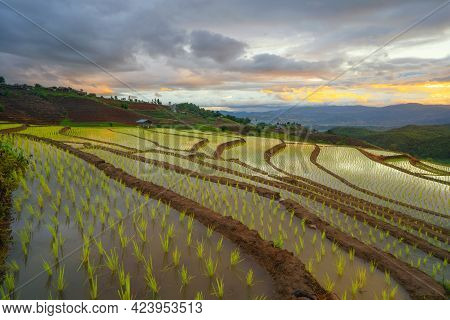 Paddy Rice Terraces With Water Reflection, Green Agricultural Fields In Countryside, Mountain Hills