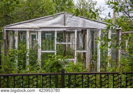 White Wooden Greenhouse With Tomatoes Ripening In It, Gardening Homemade Tomatoes