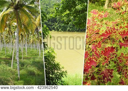 Vertical Photo Collage Of Tropical Place And Landscape In India, Kerala, Coconut Palm, Bay, Red Plan