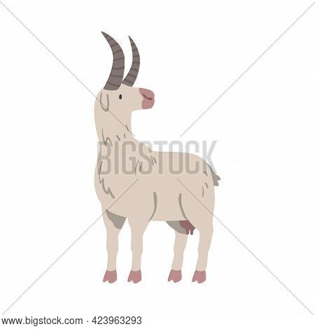 White Goat Farm Animal, Livestock Cartoon Vector Illustration
