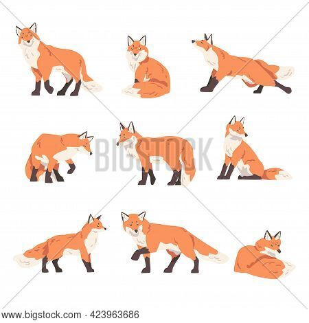 Red Fox Activity Set, Wild Hunting Predator Forest Animal Cartoon Vector Illustration