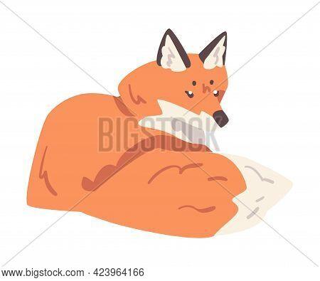 Cute Lying Fox, Wild Predator Forest Mammal Animal Cartoon Vector Illustration
