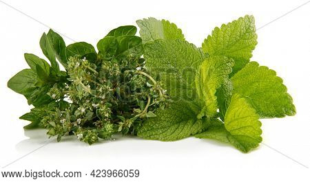 Bunch spicy herbs thyme oregano and mint. Isolated on white background.