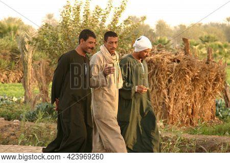Cairo Egypt, November 28, 2007: Three Egyptian Men Walking Along The Country Side Near An Alfalfa Fi