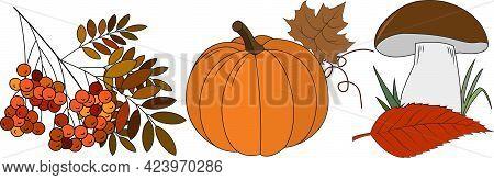 Autumn Mushroom Pumpkin Fallen Leaves Mountain Ash Vector Background