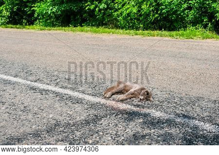 Brown Dead Cat Killed On The Road. Pets Died Killed By Careless Drivers.