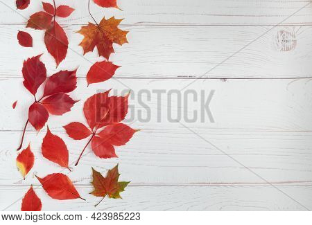 Light Wooden Background With Beautiful Autumn Leaves Of Girlish Grapes, Ivy. Autumn Season. Horizont