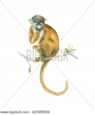 Watercolor Squirrel Monkey Isolated On White. Hand Drawn Realistic Illustration