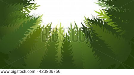 Forest Silhouette Scene. Bottom Up View. A Dark Clearing Among The Trees. Landscape With Tall Plants