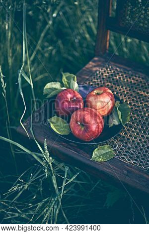 Red apples on an old chair in apple orchard