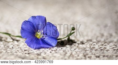 Blue Linen Flower On Linen Knitted Fabric In Natural Sunlight