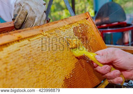 Older Woman Is Uncapping Honey Cells With A Beekeeper Fork, Tool For Opening Or Removing Wax Caps On