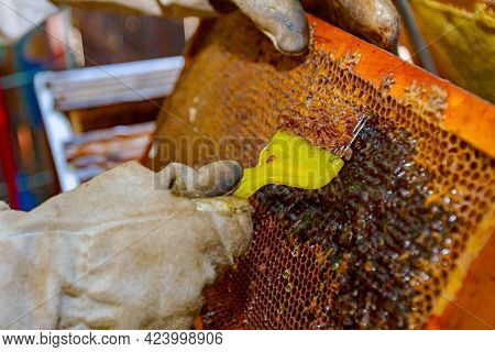 Apiarist In Protective Gloves Is Uncapping Honey Cells With A Beekeeper Fork, Tool For Opening Or Re