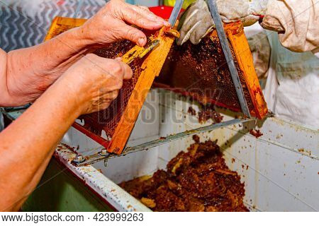 Two Apiarists, Men In Protective Gloves And Older Woman Are Uncapping Honey Cells With A Beekeeper F