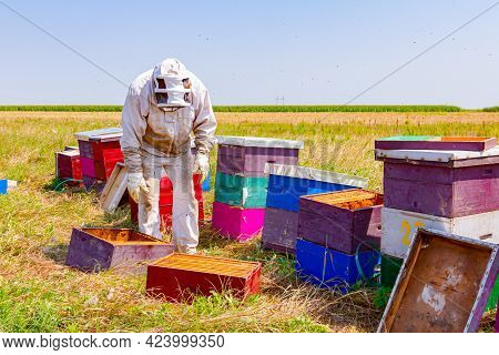Beekeeper Is Controlling Situation In Lined Wooden Colorful Beehives, Bee Colony.
