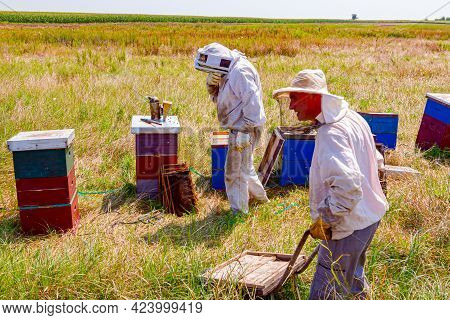Beekeeper Is Taking Out The Honeycomb On Wooden Frame To Control Situation In Bee Colony, The Other
