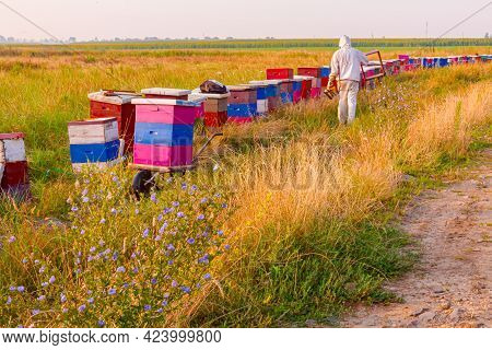 Colorful Meadow With Flowers On Sunny Day And Row Of Beehives Is Placed In Background. Beekeeper Lea