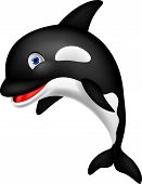 Vector illustration of killer whale cartoon isolated on white poster