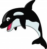 Vector illustration of smiling killer whale cartoon poster