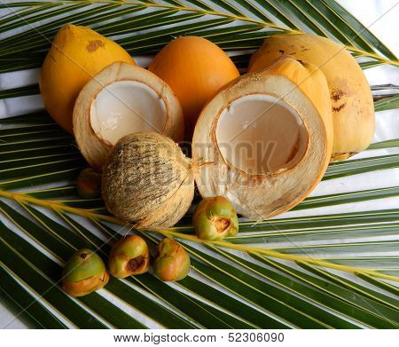Coconut - Lifecycle