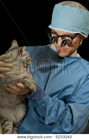 Cat And Veterinarian
