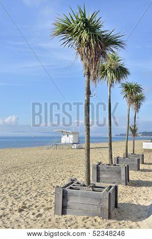 Palms on Bournemouth beach UK