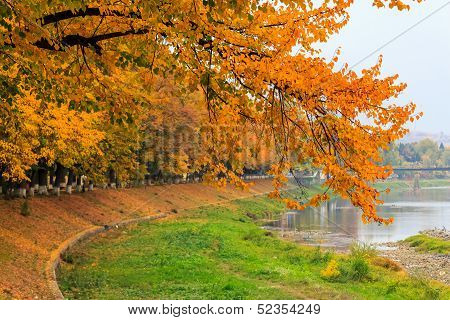 Urban Waterfront With Yellow Branch Over The River