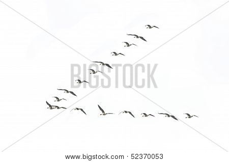 Migrating Geese Formation