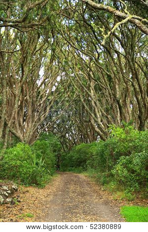 Path at Rangitoto island, New Zealand