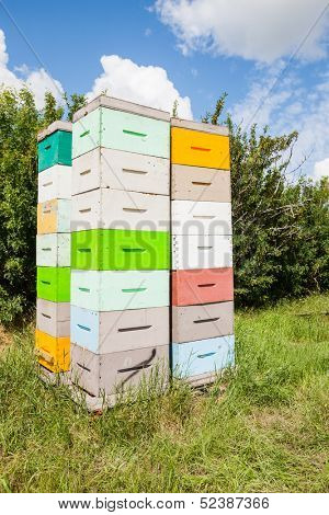 Stacks of multicolored honeycomb crates in apiary poster