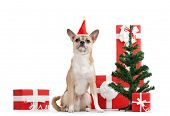 Pale yellow doggy in red cap near the presents and Christmas tree, isolated on white poster